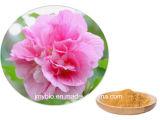 Выдержка цветка Hibiscus ингридиента 100% естественные сырцовые/порошок полифенолов