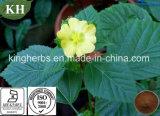 A Sida cordifolia; Alcalóides; 10: 1
