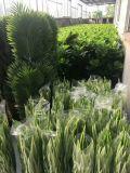 Piante di alta qualità & fiori artificiali del Ficus Lyratta Gu911094032