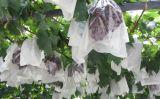 Landwirtschafts-nichtgewebter Gewebe-Frostschutz-Pflanzendeckel
