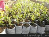 Gewebe-Winter-Frost-Pflanzenschutz-Beutel der Fabrik-pp. Spunbond nichtgewebte