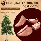 Les tubes normaux du cèdre deux de modèle vendent l'arbre en bois de chaussure