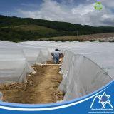 Tessuto non tessuto dei pp Spunbond con la protezione Anti-UV per il coperchio di agricoltura