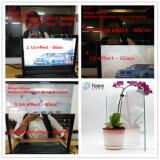 Vidrio reflexivo/vidrio teñido del vidrio/modelo/vidrio Tempered para el edificio (T-TP)