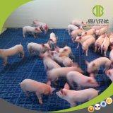 Strumentazione professionale per la cattura della cura della stalla della scuola materna dei porcellini