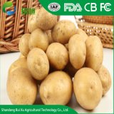 La certification ISO usine chinoise de la vente de pommes de terre fraîches