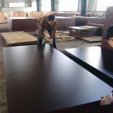 Película marrom à prova de água revestida de madeira compensada / Contraplacado em madeira / Contraplacado de construção para concreto