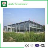 Hot-DIP galvanisiertes Glasgewächshaus für das Pflanzen