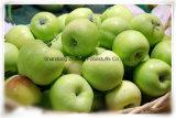 Ехпортировать свежий зеленый Apple с высоким качеством