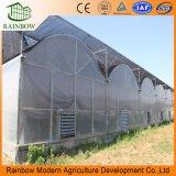 플랜트와 야채를 위한 다중 경간 Po 플레스틱 필름 Hydroponic 시스템 농업 온실
