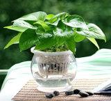 Горячий уплотнение на соблазнительные окна гидропоники пластиковые Flower Pots
