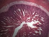 Bestscope BS-2010 Microscopio biológico con cubierta de polvo Repuestos