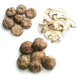 Высушенный гриб
