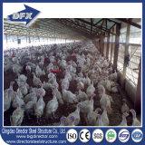 Низкая стоимость установки птицефермы стальной структуры