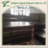 Un Tiempo Terminado Chapas de madera de eucalipto / álamo frente película