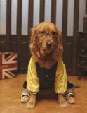 Dos colores, ropa de invierno de perro mascota grande viste