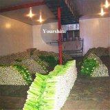 Entwurfs-Kühlraum-Speicher für Gemüse