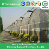Film Green House avec Sun Net de l'ombre