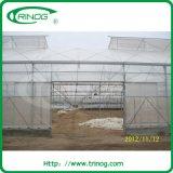HandelsFilm Greenhouse mit Ein-Feld Standplatz für Verkauf