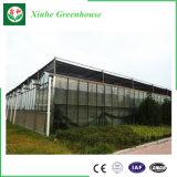 Invernadero profesional del vidrio de la estructura de acero de la agricultura