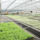 シードのための農業の温室の圧延のベンチのSeedbed