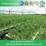 Estufa hidropónica do tomate dos sistemas da estufa do jardim