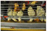 Малая клетка батареи курочки цыпленка для птицефермы (типа рамка h)
