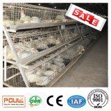 De Leverancier van China 3 van de Elektro Gegalvaniseerde Lagen Kooi van de Braadkip met Grote Prijs