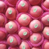La parte superior de la calidad de las manzanas Fuji rojo rubor fresco