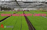 2BL-280D'un type de machine de plantation de semis
