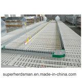 Strumentazione del macchinario del pollame agricola per gli alimentatori della catena del selezionatore