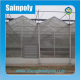 Sainpoly заводская цена одного Span PC лист земляники парниковых