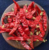 Peperoncino rosso caldo di Sooo del nuovo raccolto/peperoncino rosso Pepe-Indiano