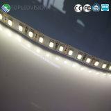 2835 LED 지구 빛 120LEDs 16W 2years 보장을 방수 처리하십시오