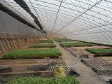Estructura de acero ligera para la agroindustria