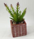 La decorazione succulente artificiale pianta i bonsai