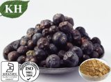 Kingherbs 100% natural da Juniper Berry Rácio extract Extrai 4: 1,