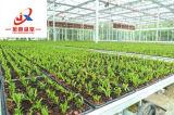 Invernadero de vidrio para móviles de semillero