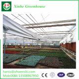 Serra gemellare di alluminio del giardino del policarbonato della parete