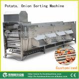 Compaginador de la patata y de la cebolla, clasificadora Og-606 de la cebolla