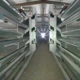 Cage intense et durable de poulet
