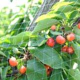HDPEのプラスチック鳥のネット/鳥の定置網の/Plasticの木の保護網