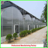 Type incurvato Agricultural Seeds Vegetable Greenhouses per Tomatoes da vendere