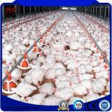 Vorfabriziertstahlkonstruktion-Geflügel-Gehäuse mit Huhn-landwirtschaftlichen Maschinen