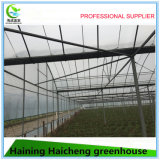 Multi Span Commercial Hydroponic Film Green House pour framboise