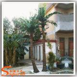 Изогнутая форма уникальный стиль искусственное дерево для Palm Garden украшения