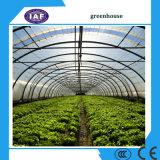 Multispan Tunnel-Gewächshaus für Erdbeere-Trauben-Himbeere, landwirtschaftliche grüne Häuser