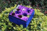 良質および価格の花はみずみずしい花を維持した
