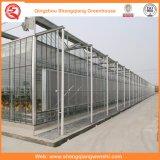 Casas verdes de vidro da multi extensão para plantar