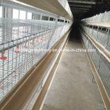 Faible prix professionnels de la conception du système de la cage de poulets de chair